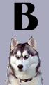 B Girl Dog Names