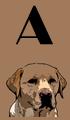 A Dog Names