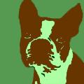 Uncommon Dog Names