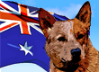 Australian Dog Names