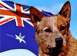 Australian Dog Names