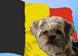 Belgian Dog Names