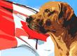 Canadian Dog Names