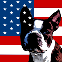  American Dog