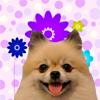 Cute Girl Dog Names