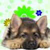 Cute Female Dog Names