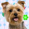 Cute Male Dog Names