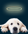 Angel Dog icon for favorite dog names page