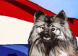 Dutch Dog Names