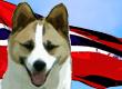 Norwegian Dog Names