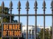 President's Dogs