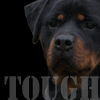  Tough Dog