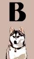 B Dog Names