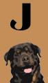 J Boy Dog Names