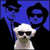 Blues Dog Names
